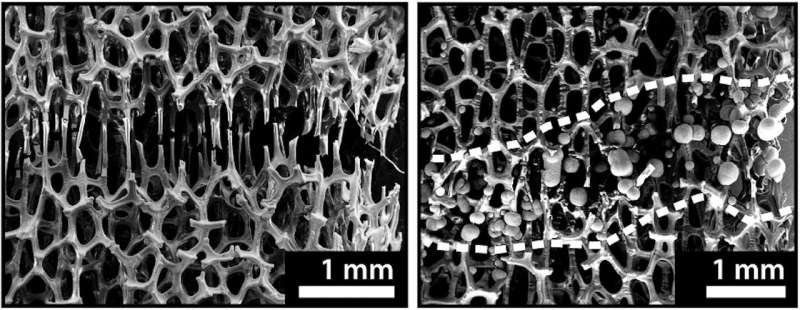 A new bone-like metal foam can 'heal' at room temperature