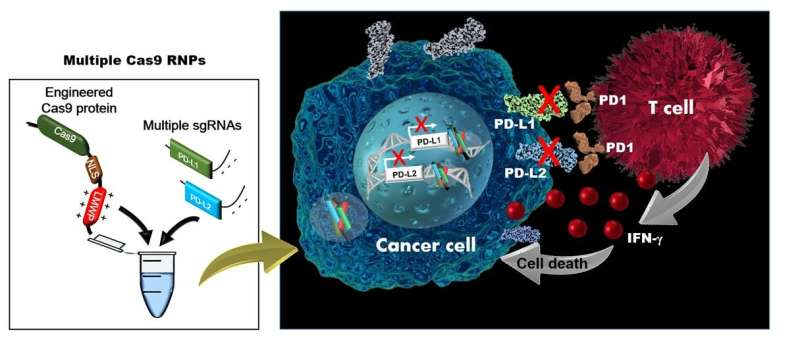 A new path to cancer therapy: developing simultaneous multiplexed gene editing technology