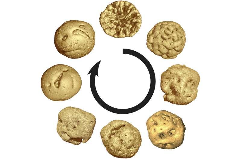 Animal embryos evolved before animals