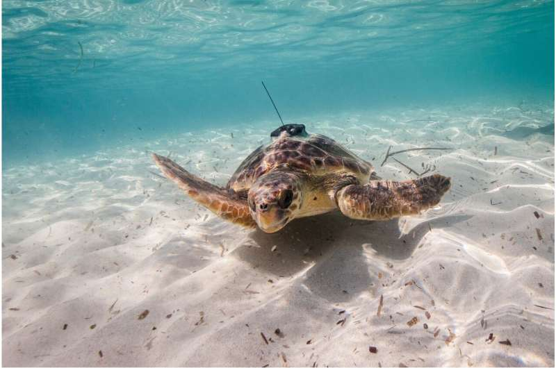 Animals could help humans monitor oceans