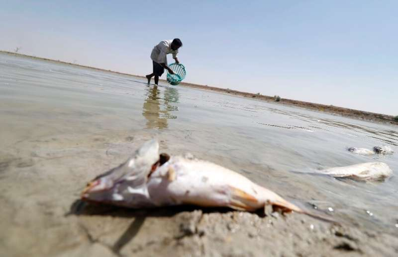 An Iraqi man collects dead fish from a reservoir at a fish farm north of Basra in southern Iraq, on August 29, 2018