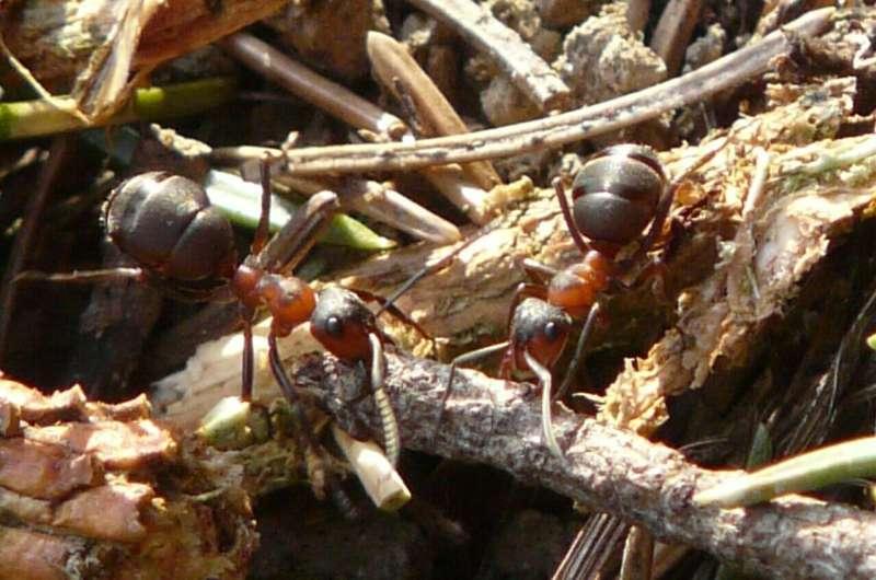 ant colony