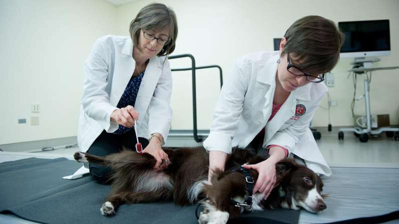 Antibody testing reveals dogs can suffer from same autoimmune encephalitis as humans