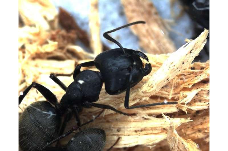 Ants maintain essential interactions despite environmental flux