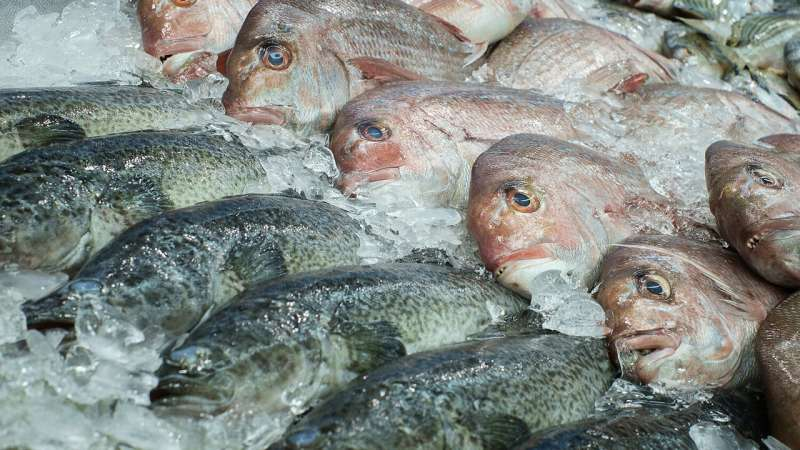 Aquaculture does little to conserve wild fisheries, according to study
