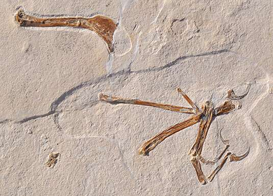 Archaeopteryx gets company
