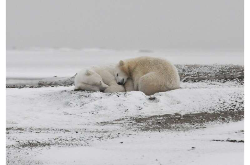Arctic could be iceless in September if temps increase 2 degrees
