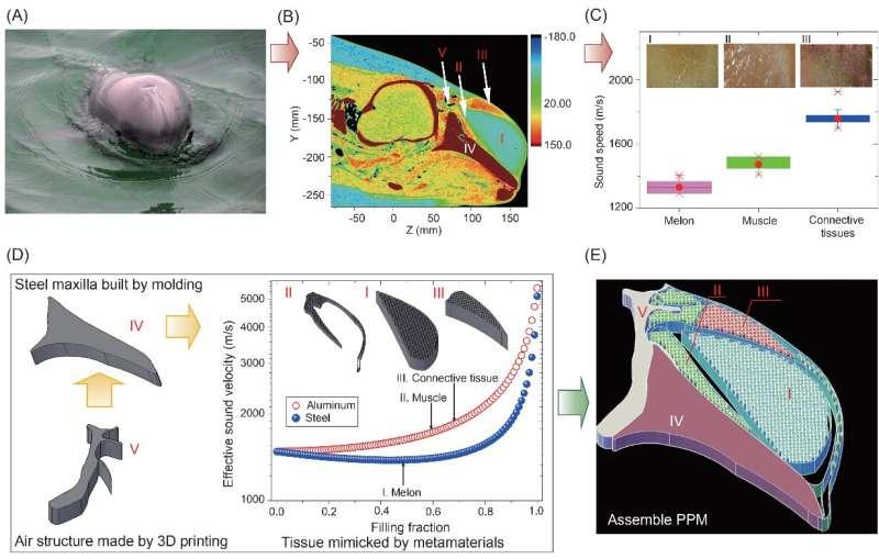 Artificial materials reconstruct the porpoise's echolocation