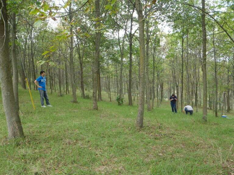 Ash tree species likely will survive emerald ash borer beetles, but just barely