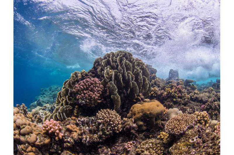 Bacteria enhance coral resilience to climate change effects