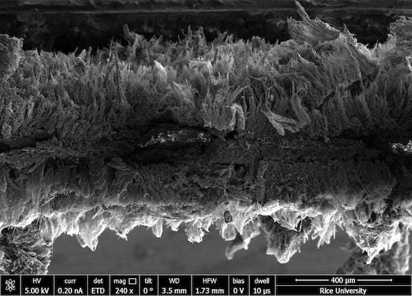 Bacteria trapped—and terminated—by graphene filter