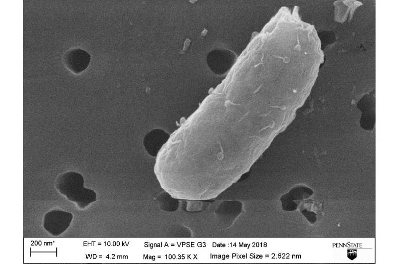 Bacteria uses viral weapon against other bacteria