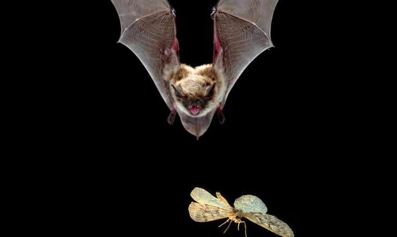 Bats may benefit from wildfire