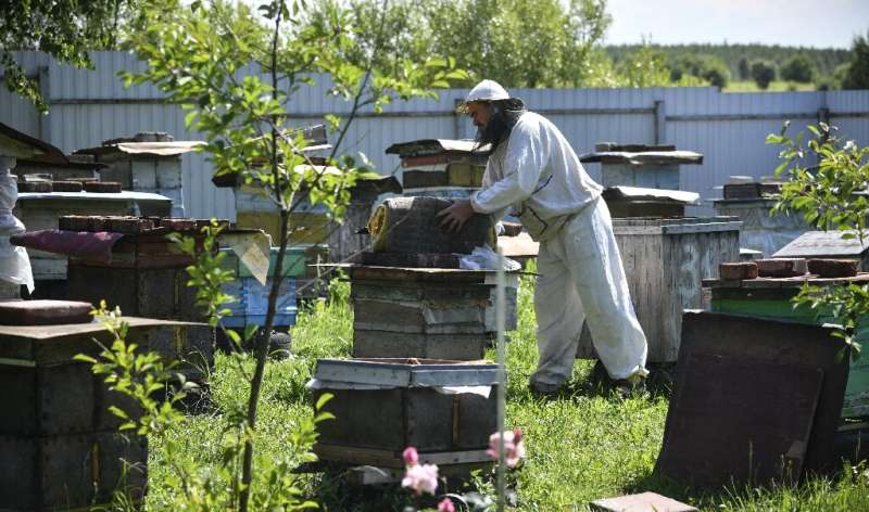 Beekeeper Anatoly Rubtsov has lost nearly all of his hives