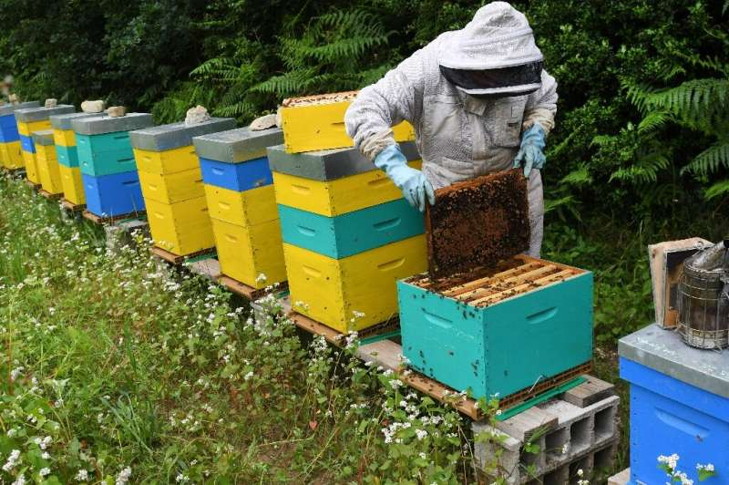 Bees are vital for growing the world's food as they help fertilise crops by transferring pollen from male to female flowers