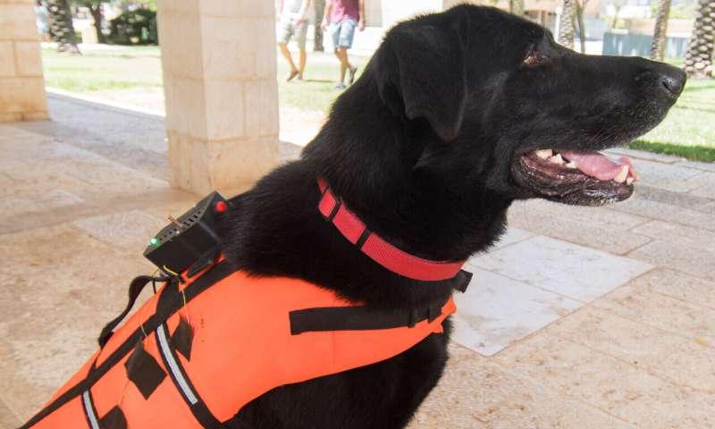 Ben-Gurion University researchers train dogs to respond to haptic vibration commands