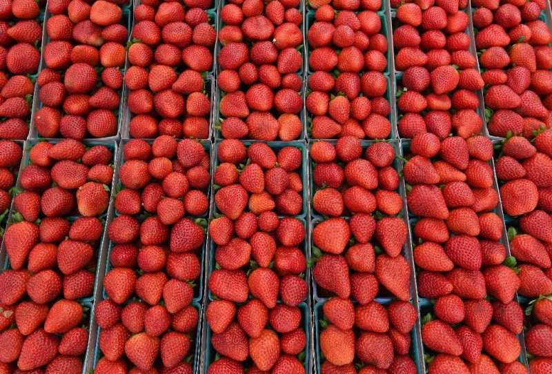 Better data can help determine optimal growing conditions for various foods, researchers say