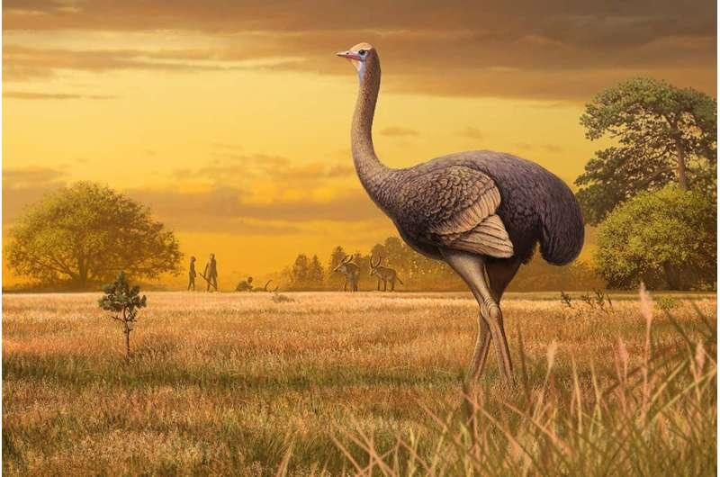 Big birds: Giant, 1,000-pound birds once roamed around Europe