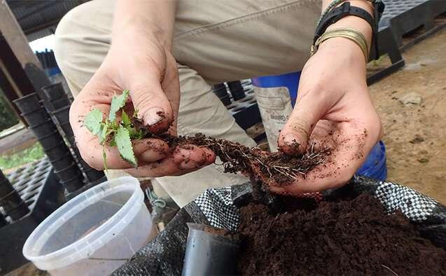 Biochar: A better start to rain forest restoration