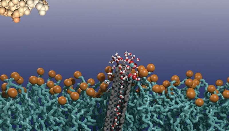 Biosensor may provide better cancer diagnosis