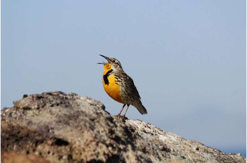 Birds' surprising sound source
