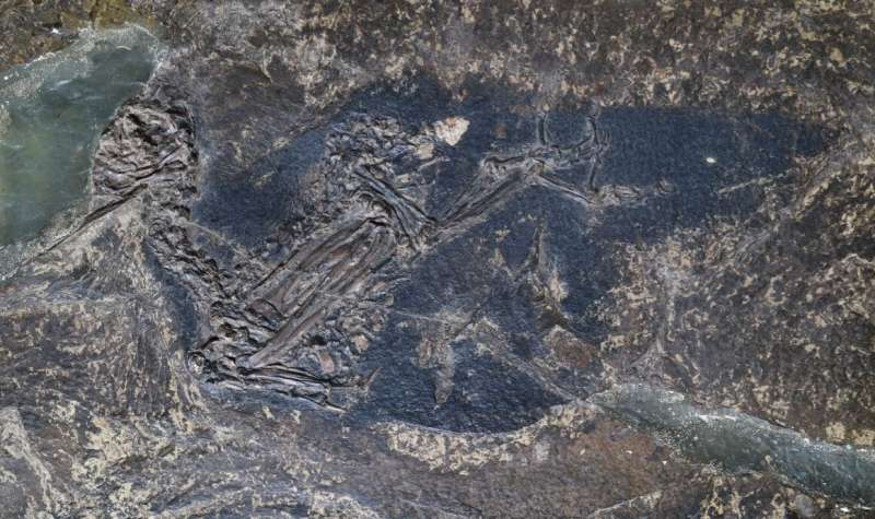 Blue color tones in fossilized prehistoric feathers