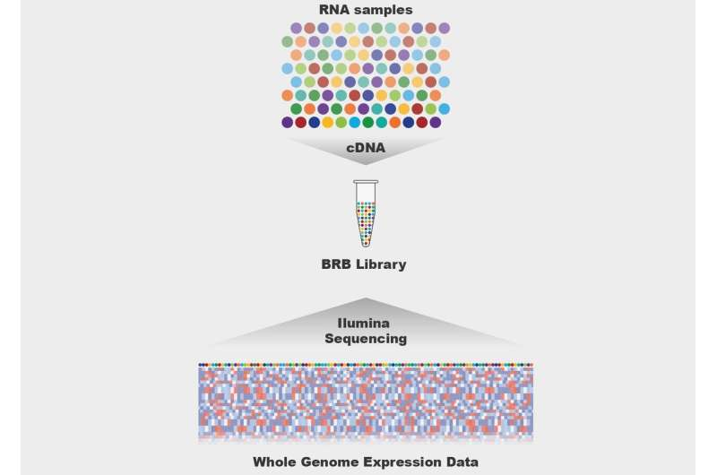 BRB-seq: The quick and cheaper future of RNA sequencing