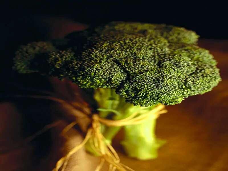 Broccoli you are sure to love