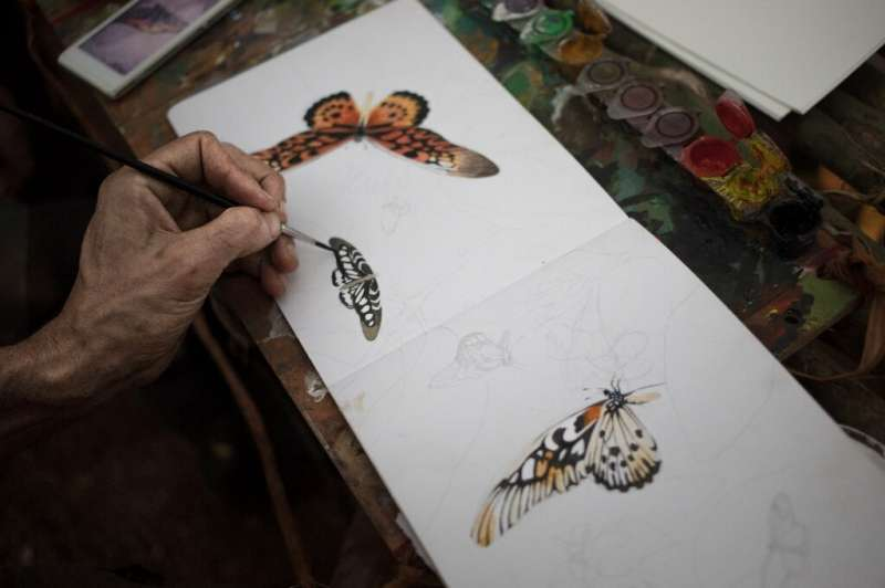 Brush strokes: The expedition's draftsman draws an African giant swallowtail and other species