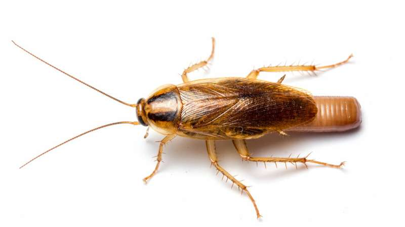 'Bug bombs' are ineffective killing roaches indoors