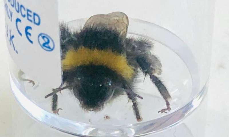 Bumblebees exposed to Chernobyl-levels of radiation consume more nectar
