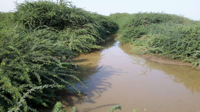 CABI helps map ferocious speed and likely cause of woody weed spread across Ethiopia