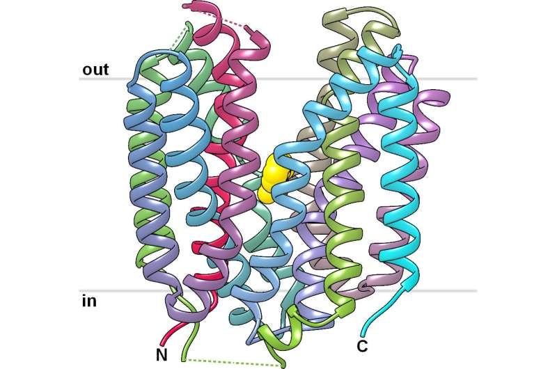 Cancer control: Structure of important transport protein solved