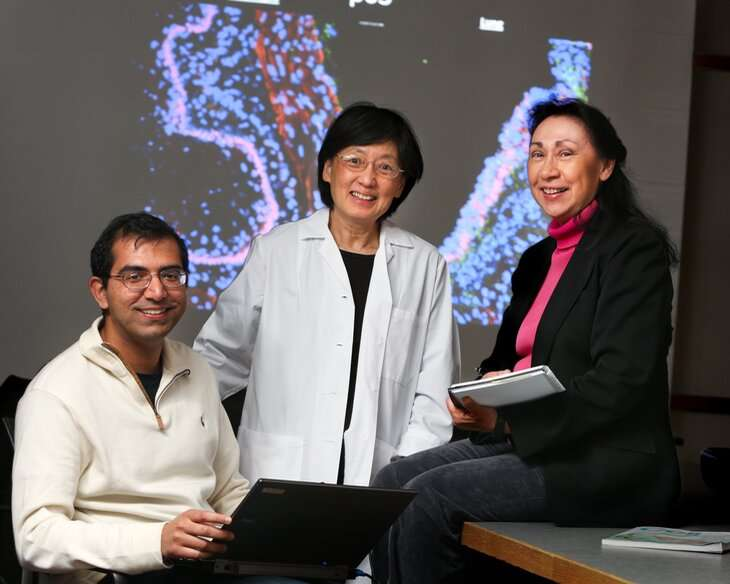 Cancer drugs speed airway repair in lungs damaged by bacterial infections