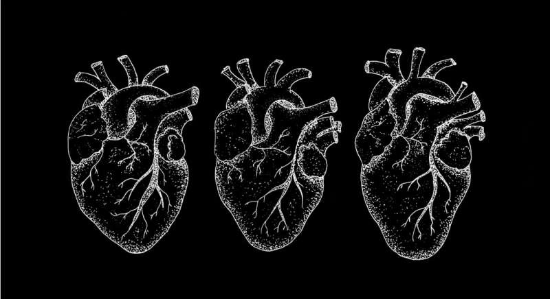Carbohydrate in the heart seems to help regulate blood pressure