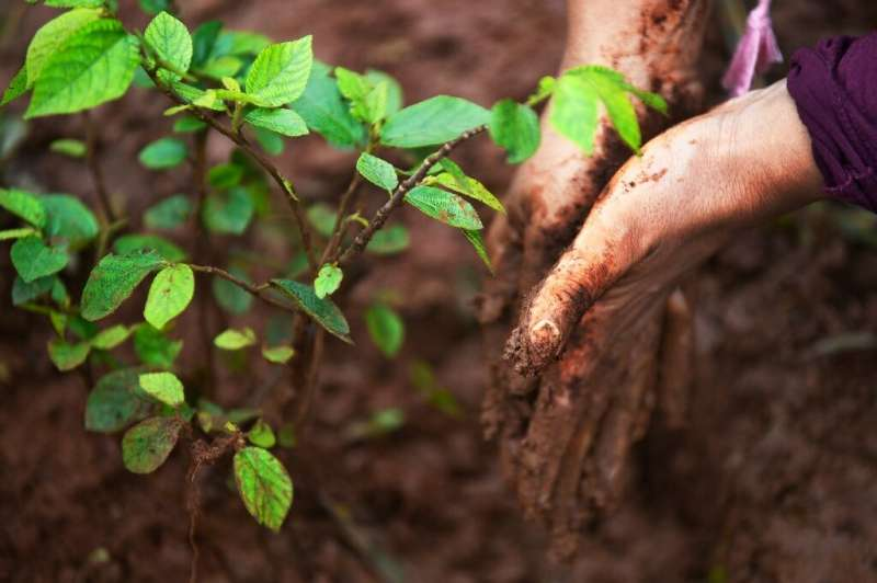 Carbon offset schemes are based on trees absorbing carbon dioxide—but can planting compensate for pollution that causes global w