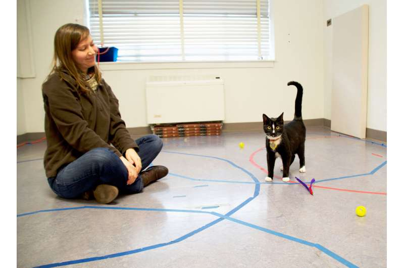 Cats, like children and dogs, develop attachments to their caregivers, study shows