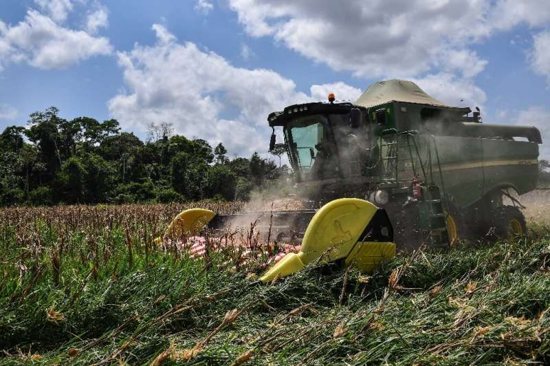 Cattle rancher Luiz Medeiros dos Santos leases half of his land to local grain producers; here, a harvester is seen in a corn fi