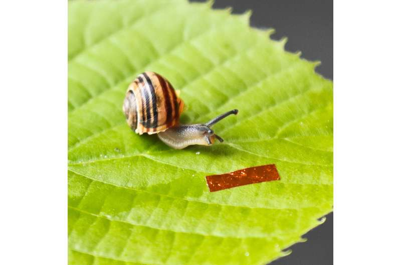 Centimeter-long snail robot is powered with light