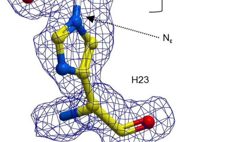 Chemists incorporate an abnormal residue into an enzyme to show that the catalytic range of enzymes can be enlarged