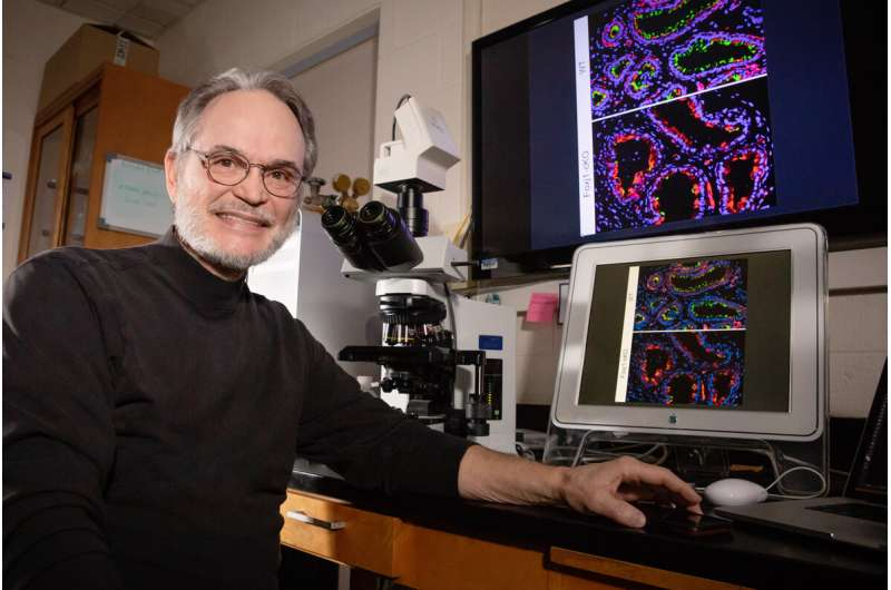 Cilia beat to an unexpected rhythm in male reproductive tract, study in mice reveals