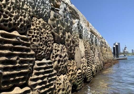 Coastal infrastructure urgently needs a rethink, marine ecologists say