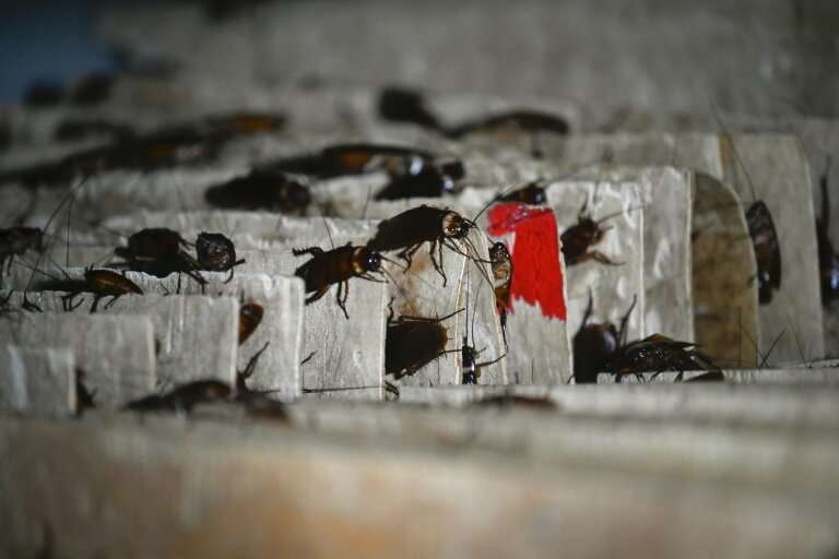 Cockroaches may be a bugbear for most, but dedicated breeders in China are turning them into a niche business, selling the insec