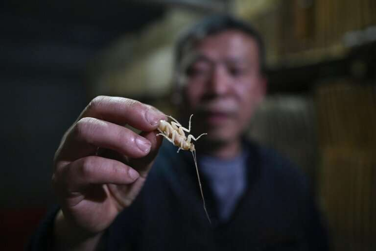 Cockroach farmer Li Bingcai breeds the insects in southwest China, and sells them to restaurants to be served up in local cuisin
