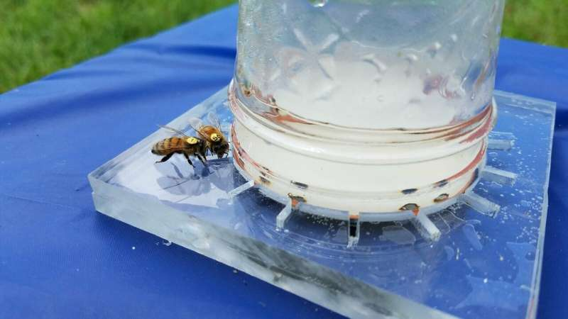 Codifying the universal language of honey bees