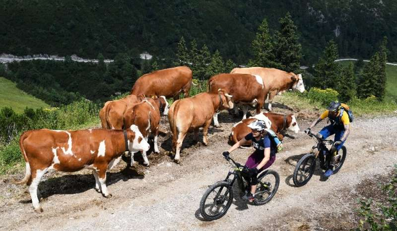 Complaints by hikers have appeared in the German media often accusing e-bike enthusiasts of whizzing up and down mountain paths,