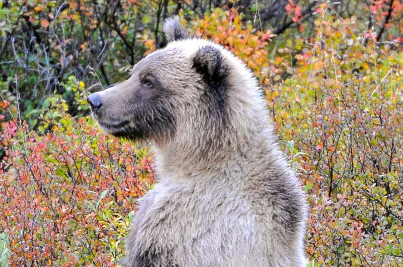 Conserving large carnivores in Alaska requires overhauling state policy