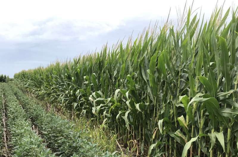 Corn and soybean rotation could pose long-term tradeoffs for soil health