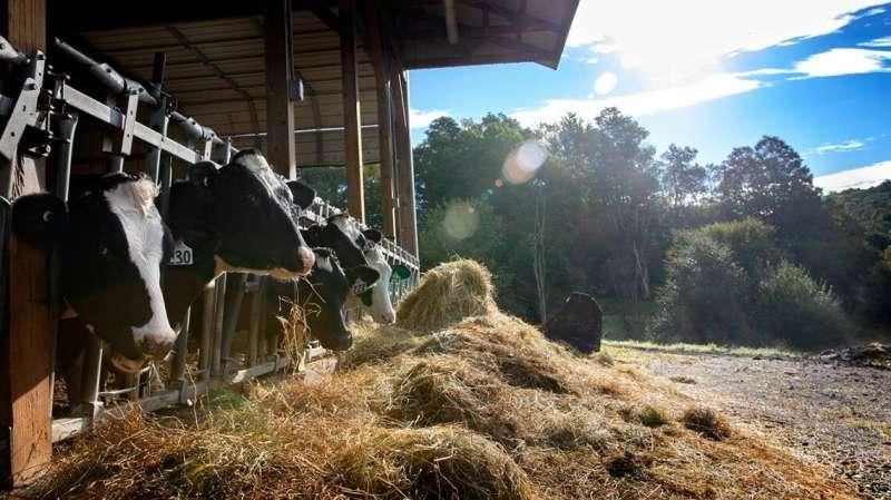 Cornell model helps dairy farms reduce nitrogen, save money