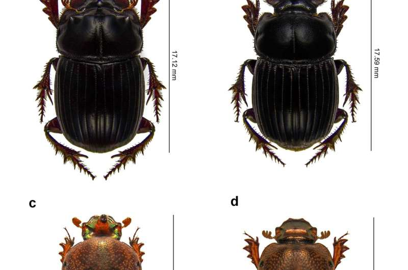 Crappy news for the dung beetle and those who depend on them